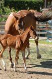horses_heaven_vda_asar_virda_ice_14