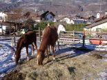 horses_heaven_vda_asar_virda_ice_22