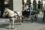horses_heaven_vda_raduno_eq_2007_7