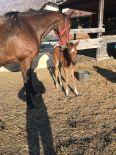 horses_heaven_vda_cavalli_vinnie_2