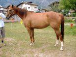horses_heaven_vda_cavalli_virdan_3
